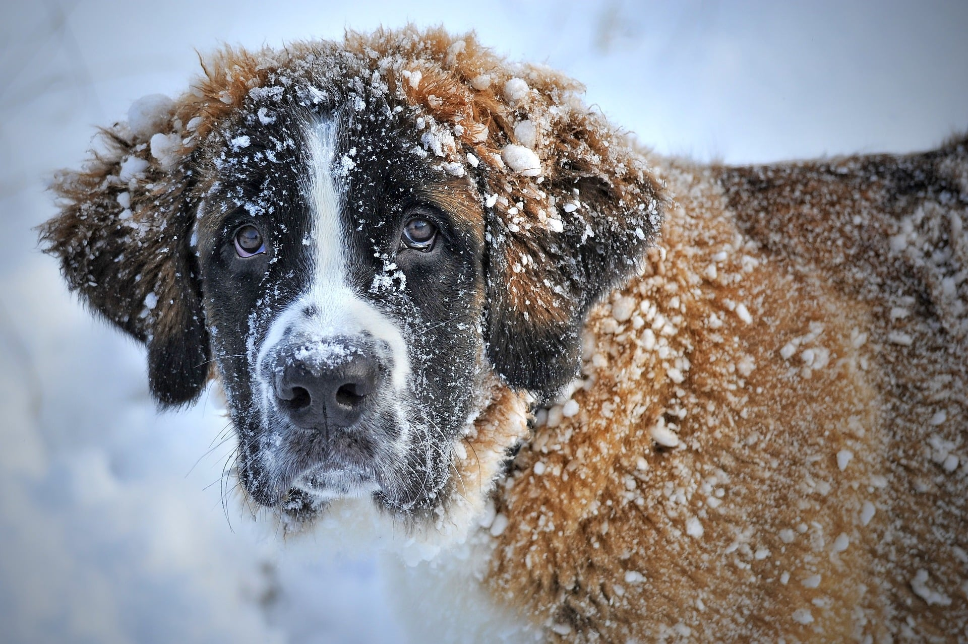 dog-in-the-snow-1168663_1920