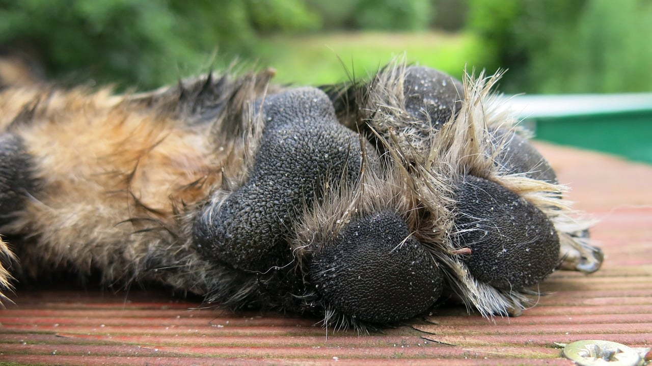 dogs-paw-1011206_1280