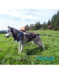 szelki-sled-sport-blue-velvet5